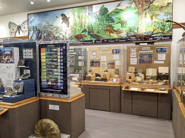 Cases of the life through time exhibit at the museum
